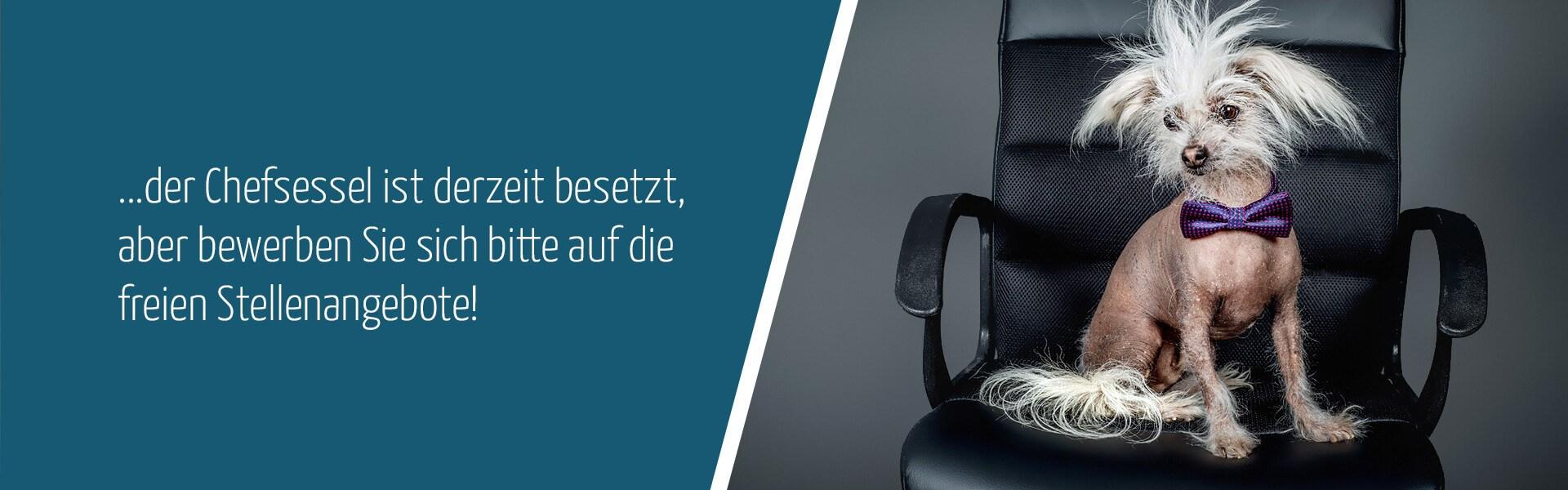 Aktuelle Stellenangebote bei contrast - Schulbegleiter / Persönliche Assistenz in Hannover
